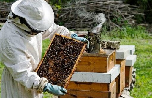 Власеница : Jaвни позив за остваривање права на премију за узгој и производњу пчела важи до 10.јула